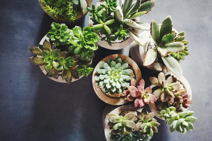 複数の多肉植物の鉢を並べたインテリア画像