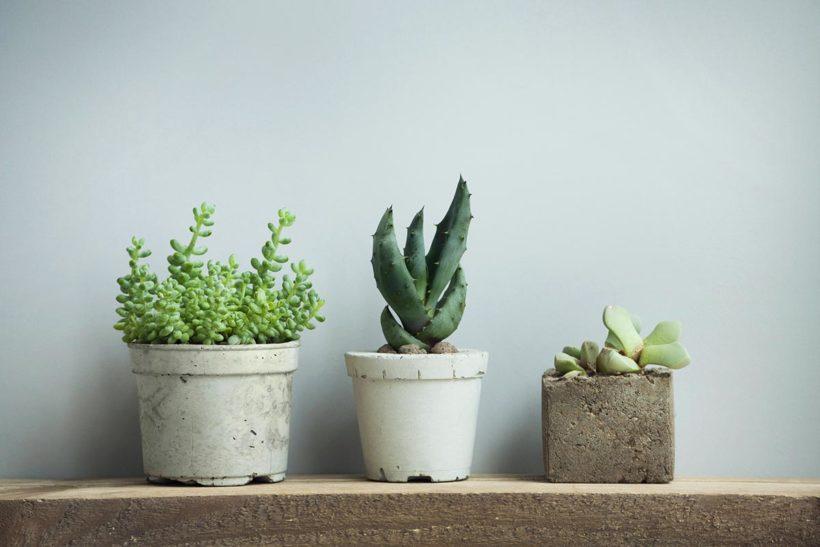 風通しの良い日なたを好む「春秋型の多肉植物(4~6月、9~11月)」のインテリア・イメージ