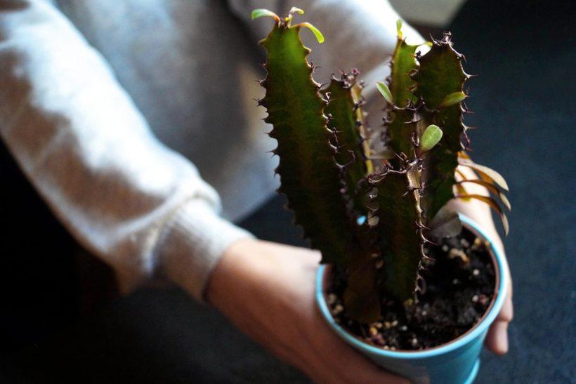 冬型の多肉植物の画像(9~6月)のインテリア・イメージ